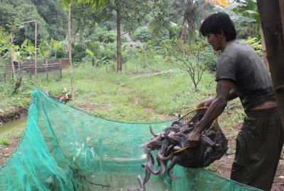 Petani ikan lele di Bambu Apus, Pamulang. (one)