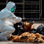 Kota Tangsel Waspada Flu Burung