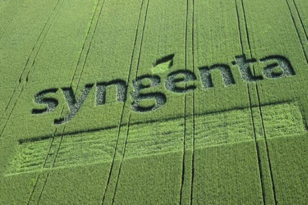 Syngenta. (bbs)