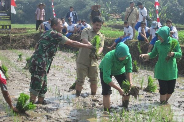 Aksi tanam padi TNI di lahan milik Bintaro di Pondok Aren. (hen)