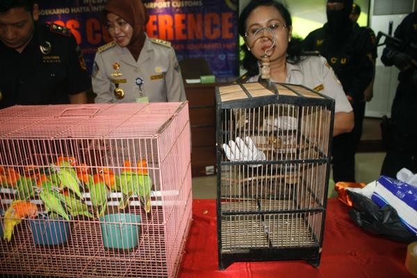 Burung Love Bird yang diselundupkan pelaku dari Tiongkok. (eni)