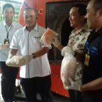 Ribuan Kilogram Ayam Kedaluarsa Dibakar