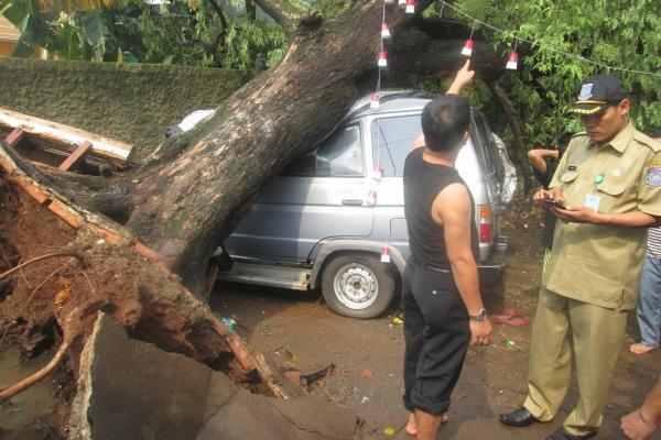 Warga dan pegawai kelurahan mengamankan lokasi pohon tumbang. (hen)