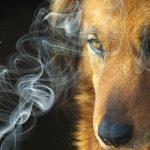 Rokok Juga Bahaya untuk Kesehatan Hewan