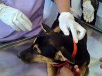 vaksinasi hewan