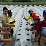 DKP Kotang & KT Bahagia Sejahtera Galakan Tanam Melon