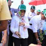 Bandara Soekarno-Hatta Tanam 4.000 Mangrove